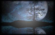 Vignette de l'artwork Papillons au clair de lune